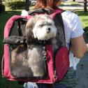 Pet Carriers/Backpacks